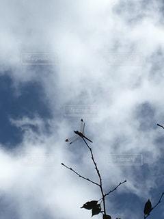 曇り空とトンボの写真・画像素材[2351514]