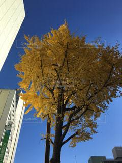 木のクローズアップの写真・画像素材[2351757]