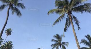 ヤシの木のあるビーチの写真・画像素材[2380765]