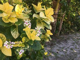 花の写真・画像素材[2583998]