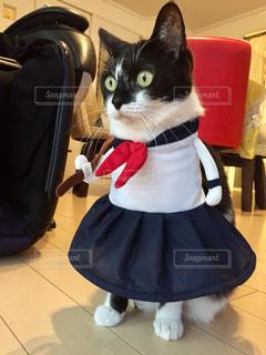 ヤンキー猫の写真・画像素材[2770896]