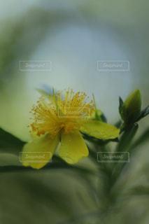 黄色い花の写真・画像素材[2353169]