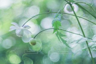 花のクローズアップの写真・画像素材[2353170]