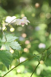 花のクローズアップの写真・画像素材[2353171]