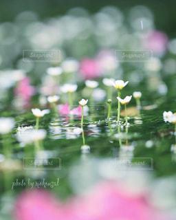 花のクローズアップの写真・画像素材[2353893]