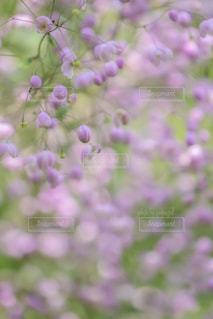 花のクローズアップの写真・画像素材[2357119]
