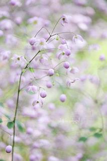 花のクローズアップの写真・画像素材[2357120]