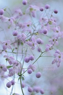 花のクローズアップの写真・画像素材[2357121]