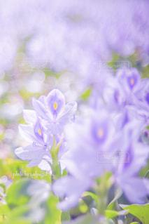 花のクローズアップの写真・画像素材[2382774]