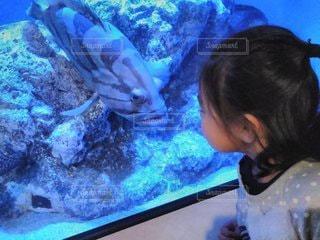 魚さん、こんにちは!の写真・画像素材[2355658]