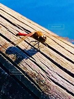 木製のフェンスの上に座っているボートの写真・画像素材[2695240]