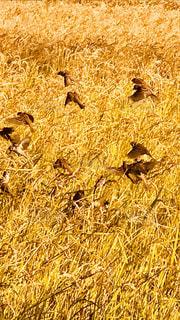 乾燥した草原の上に立つ羊の群の写真・画像素材[2769339]