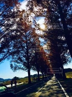 森の中の木の写真・画像素材[2769391]