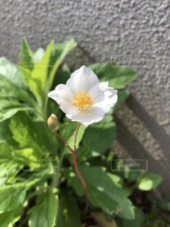 花のクローズアップの写真・画像素材[2355923]