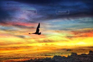 夕焼けを飛ぶの写真・画像素材[2355732]