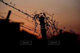 夕日の上有刺鉄線の写真・画像素材[3259989]