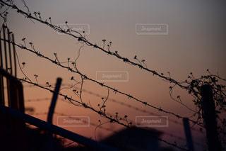 ワイヤーに座っている鳥の群れの写真・画像素材[3259990]