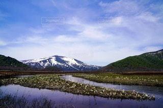 水芭蕉群生地の写真・画像素材[2355678]