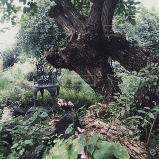森の中の大きな木の写真・画像素材[2357170]