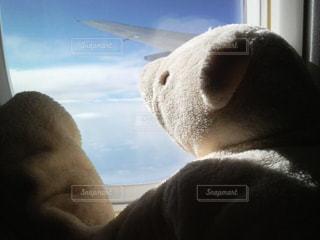 くまと海外旅行の写真・画像素材[3230081]