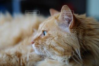 猫の写真・画像素材[127981]