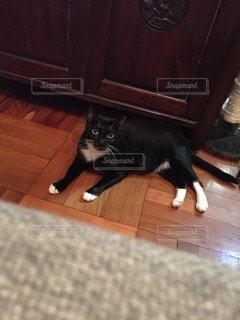 猫の写真・画像素材[91287]