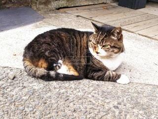 歩道に横たわる猫の写真・画像素材[2357890]