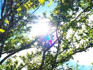 木漏れ日の写真・画像素材[2585435]