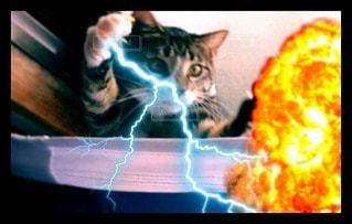 猫の写真・画像素材[95226]