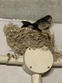 燕の巣のクローズアップの写真・画像素材[2357065]