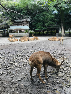 鹿の群れの写真・画像素材[2358853]