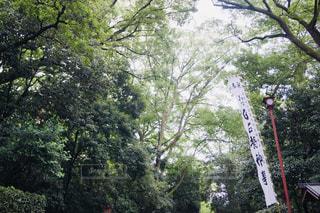 下鴨神社の写真・画像素材[2362326]