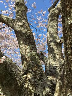 木のクローズアップの写真・画像素材[2359470]