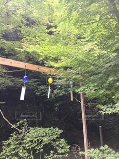 森の木の写真・画像素材[2359628]