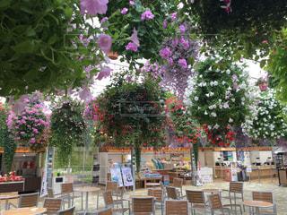 ベンチと花籠の風景の写真・画像素材[2365525]