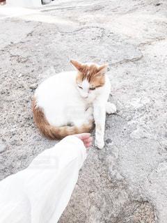 地面に横たわるオレンジと白の猫の写真・画像素材[2497852]