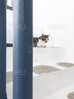 建物の横に座っている猫の写真・画像素材[2497853]