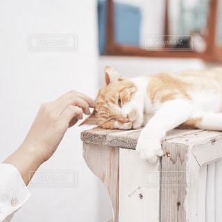白い床に座っている猫の写真・画像素材[2497856]