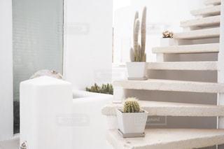 階段とサボテンの写真・画像素材[2497857]