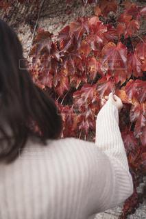 紅葉と女性の写真・画像素材[2714955]