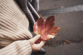 紅葉を持つ女性の手の写真・画像素材[2714956]