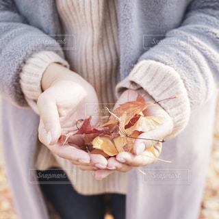 手のひらの中の紅葉の写真・画像素材[2714966]