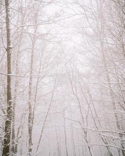 雪に覆われた木の写真・画像素材[2845751]
