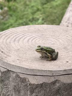 爬虫類のクローズアップの写真・画像素材[2359399]