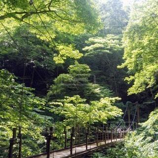 緑豊かな山の吊り橋の写真・画像素材[2359801]