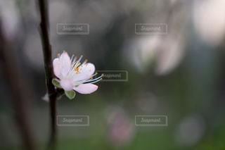 自然の写真・画像素材[141122]