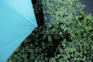 自然の写真・画像素材[141128]