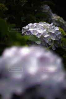自然の写真・画像素材[147501]