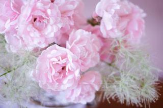花の写真・画像素材[147503]