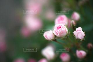 自然の写真・画像素材[147505]